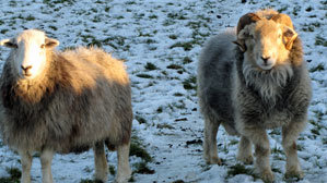 sheepswool insulation