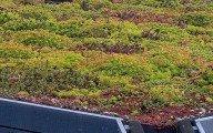Green Roofs For Garden Rooms